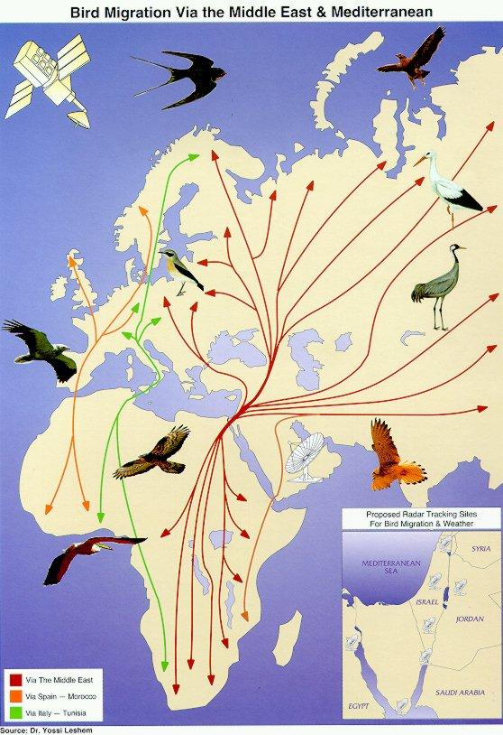 paukščių migracijos žemėlapis