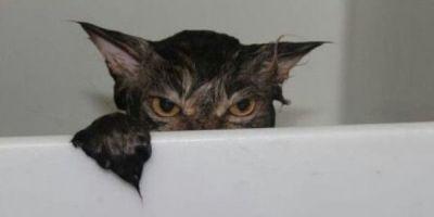 išmaudyta katė